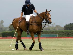 Koňské pólo patří mezi nejušlechtilejší sportovní disciplíny. Na hráče póla možná narazíte v parku Hurlingham.